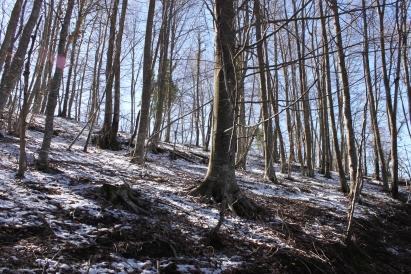 Bosc de Rupit